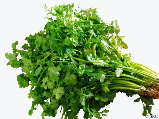 Coriander Leaves (Dhaniya Patti)