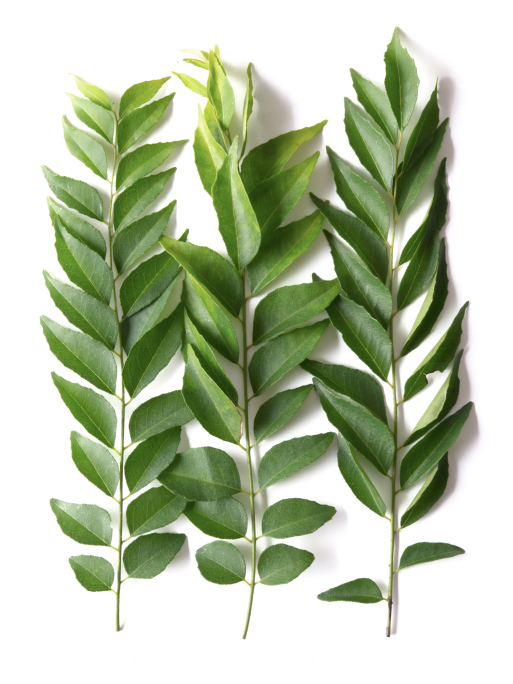 Curry Leaves (Mithi Neem)