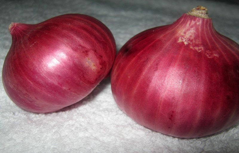 Red Onion (Lal Pyaz)